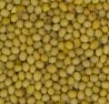 Oriental Mustard